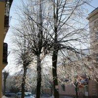Зимний день... :: Natalisa Sokolets