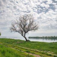 цепляясь за верхушку дерева :: Андрей ЕВСЕЕВ