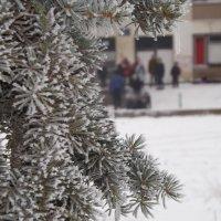 зима :: Алёна Кудряшова