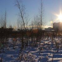 Морозное утро :: Андрей Ко