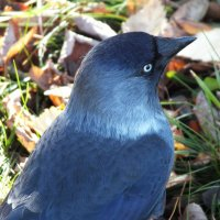 синяя птица :: Михаил Николаев