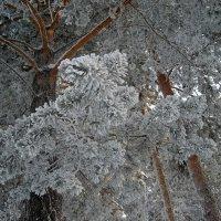 деревья моего детства :: liudmila drake
