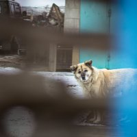 Жизнь за забором :: Valentina Zaytseva
