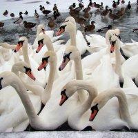 Лебединое озеро :: *tamara* *****