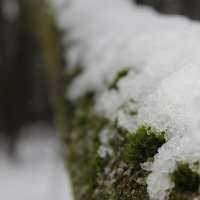 зима :: Иван Иваничкин