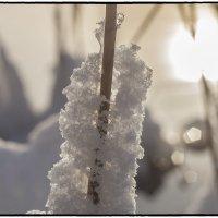 Снежок :: Юрий Клишин