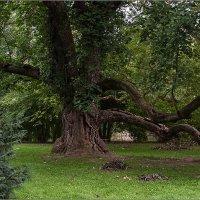 Старое дерево :: Lmark