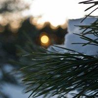 Зимний лес :: Александра Будникова