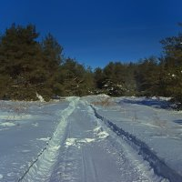 Зимняя благодать :: Denis Aksenov