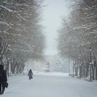 Зима пришла :: Valentina Zaytseva
