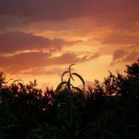 Яркие краски заката :: Татьяна Пальчикова