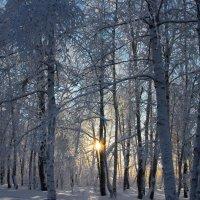 Зимний лес. :: Николай