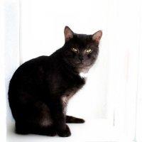 Мой кот :: Эльвира Валиева