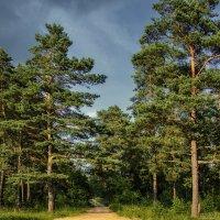 Заповедные леса Беларуси :: Сергей Хомич