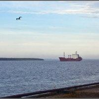 В сентябре на Северной Двине :: Владимир Прынков