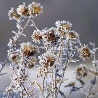 Природа украшает скудную растительность... :: ФотоЛюбка *
