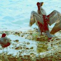 Крылья должны быть сухими :: Серж Бакши