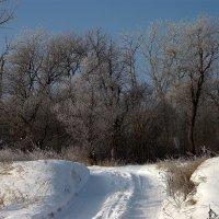 Прокатанная дорога... :: ФотоЛюбка *