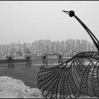 Птица счастья :: Svetlana Kravchenko