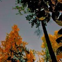 деревья :: Сергей Глотов