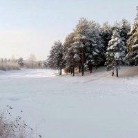 морозный день :: Олег Петрушов