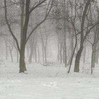 Туман который сьест снег за сутки :: Александр Кузин