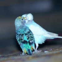 Птичий любовь :: Rasul Narimon o'g'li