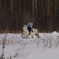 В лесу :: Наташа Белоусова