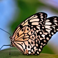 Эффект бабочки. :: Edward J.Berelet