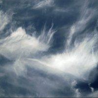 Парящие в небесах :: Татьяна Пальчикова