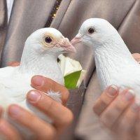 голуби :: Михаил Грин