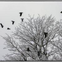 В белой мгле силуэт чёрной птицы........... :: Юрий Клишин