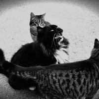 Коты Фороса :: Ольга Мальцева