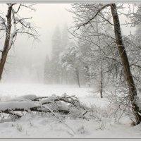 Зимний денек :: Nikita Volkov