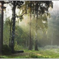 Утро в лесу :: Nikita Volkov