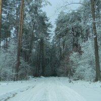 зимнее :: Ekaterina K