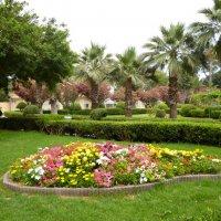 Кипр. Парк в Лимассоле :: Ольга Мишустина