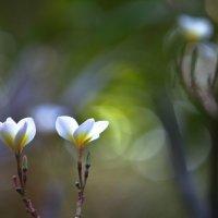 Bali :: Евгений Фомин