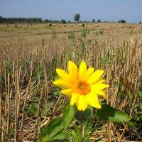 Солнечный урожай :: Svetlana Kravchenko