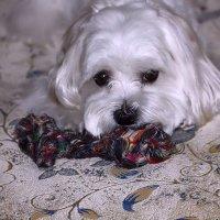 Бони со своей любимой игрушкой... :: Nonna