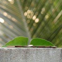 Листья и семена :: Оксана Шрикантх
