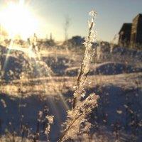 Зимушка зима :: Gu Safina