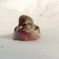 На  снегу :: Вик Токарев