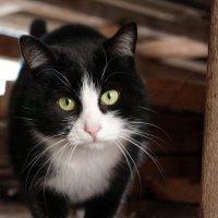 Любопытный кот :: Касим