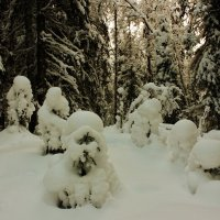 Малыши в снежных шубках.. :: ирина )))