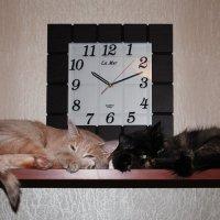 """""""Черная"""" кошка, """"Белый"""" кот :: Александр Жуков"""
