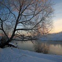 Ветвями прикасаясь к солнцу... :: Юрий Морозов