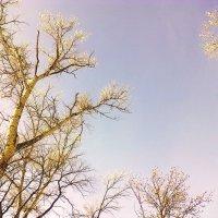 Весна идет,весне дорогу .... :: Галина Полохина