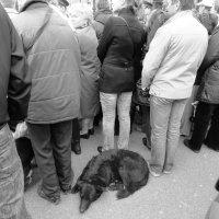 собачка на митинге :: agban99
