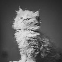 Всем любви и теплых котов=) :: Светлана Шагова